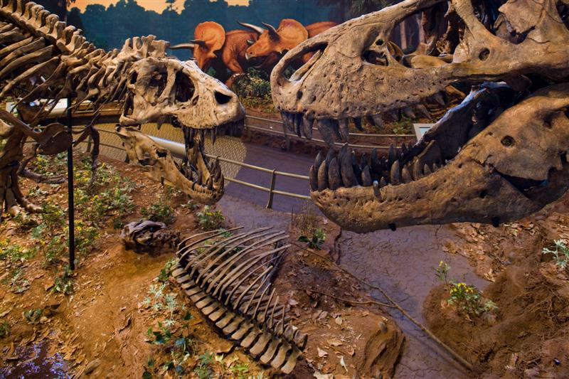 [Image: Carnegie-Museum-Dinosaurs-Medium.jpg]