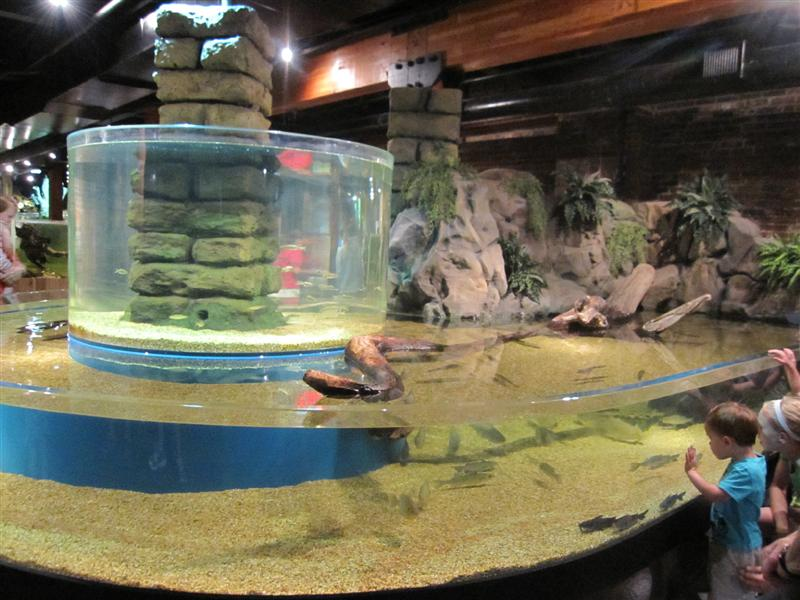 Greater Cleveland Aquarium World 39 S Longest Underwater
