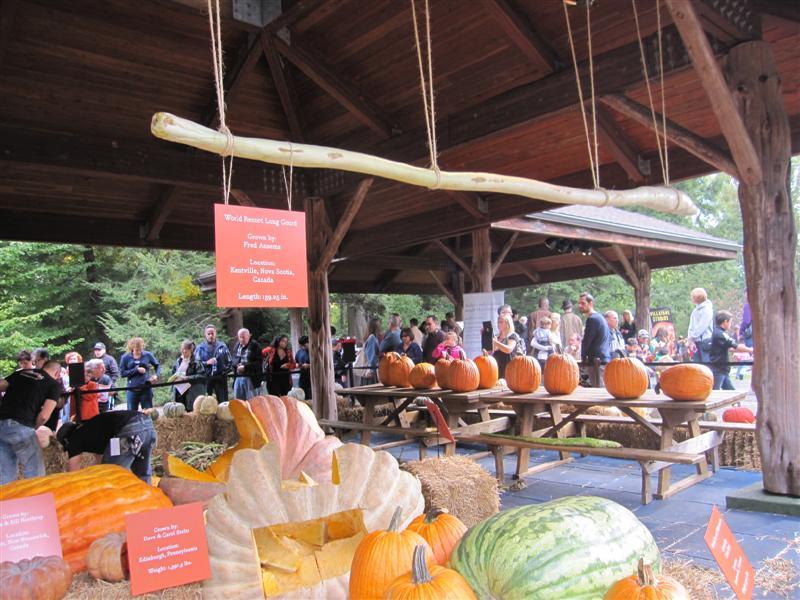 worlds longest gourd